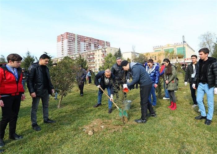Azay Quliyevin seçki qərargahı Gənclər günündə ağacəkmə aksiyası keçirib - FOTOLAR