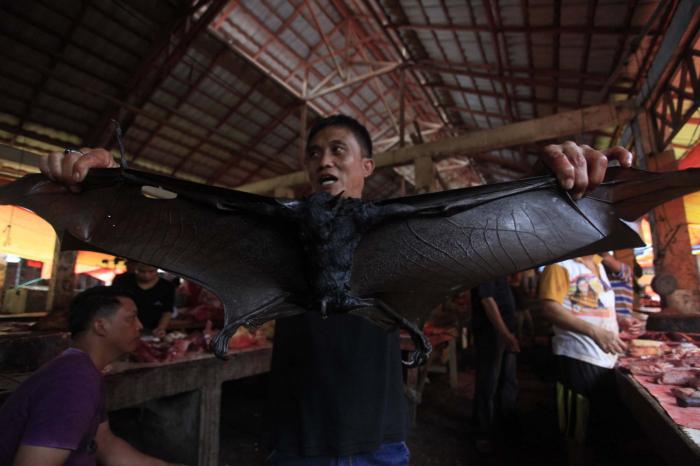 Bat meat still popular in parts of Indonesia, despite coronavirus fears