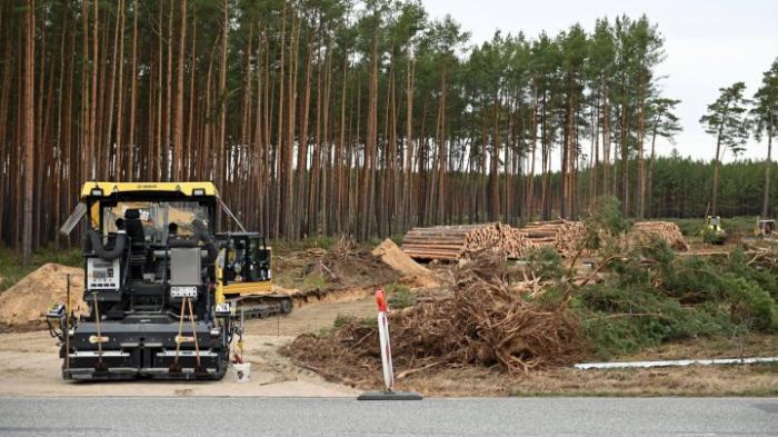 Tesla darf Waldstück für Fabrik roden