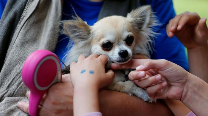 Une compagnie aérienne pourrait devoir rembourser un chien pour un vol annulé