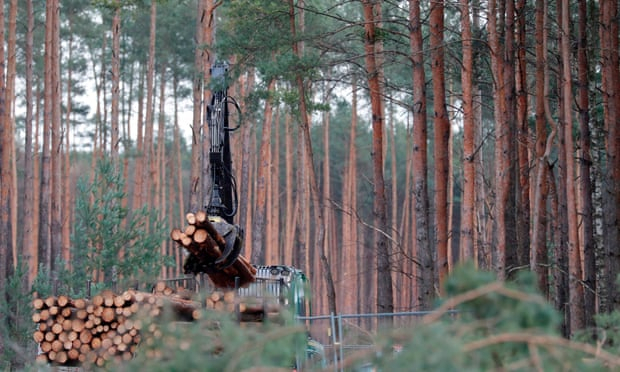 German court says Tesla can clear trees to build car factory