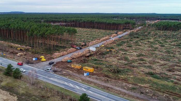 Nicht einmal Grüne wollen Tesla-Wald retten