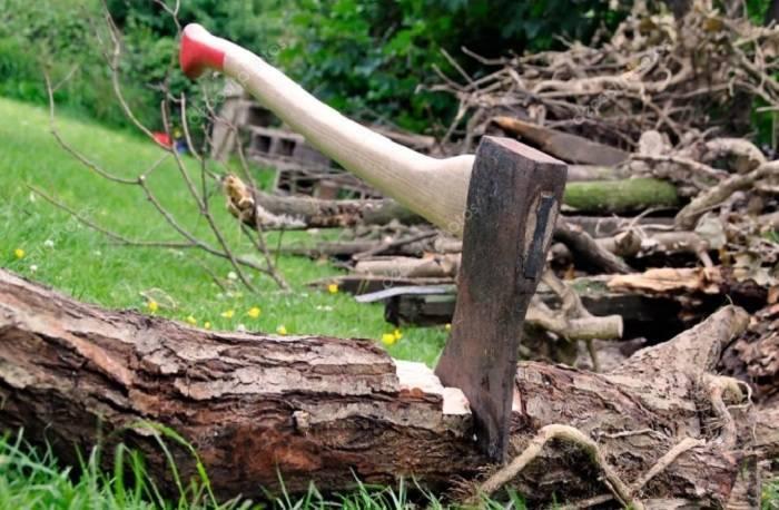 Qanunsuz ağac kəsilməsi faktı araşdırıldı