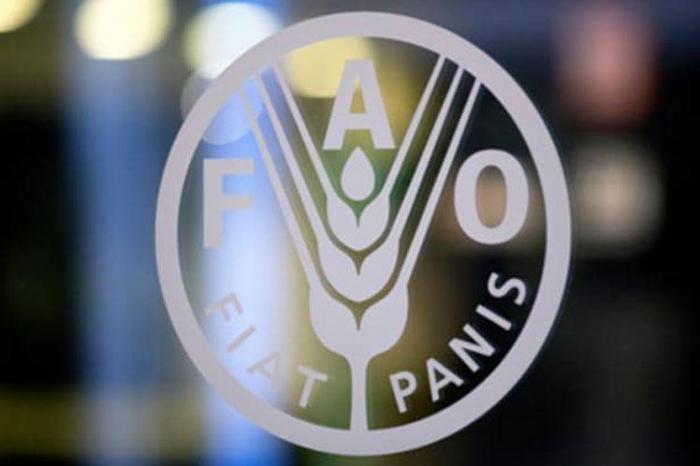 FAO: Heyvanların virusu insanlara ötürə biləcəyinə dair sübut yoxdur