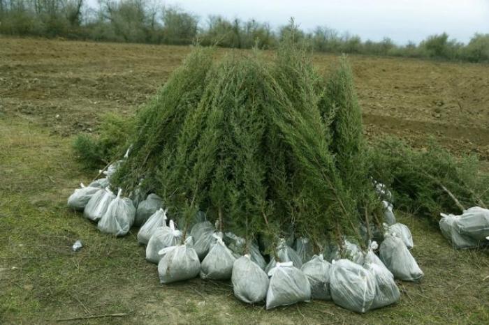 Bu il ölkədə 174 350 ağac əkilib