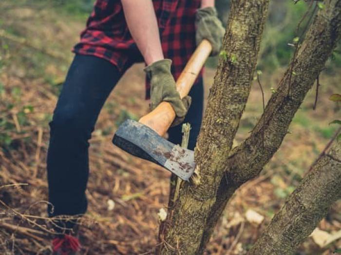 Ağac kəsənin işi prokurorluğa göndərildi