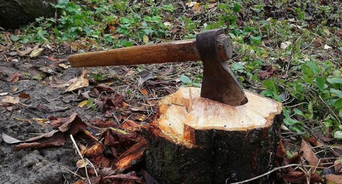 Lerik meşələrində ağac kəsimi aşkarlandı