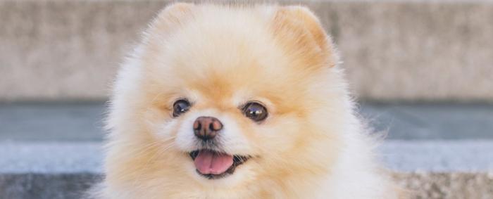 Hong Kong confirms pet dog has coronavirus in suspected human-to-animal transmission