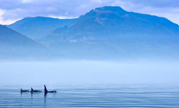 Silence is golden for whales as lockdown reduces ocean noise