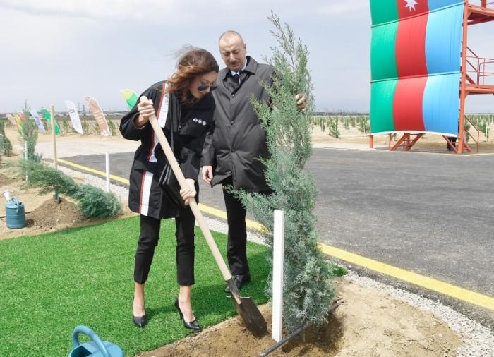 Prezident və birinci xanım ağac əkdi - FOTOLAR