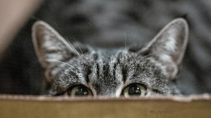 Los gatos son máquinas de matar altamente eficaces, advierte un estudio