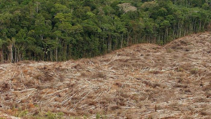 Abholzung der Regenwälder steigt dramatisch