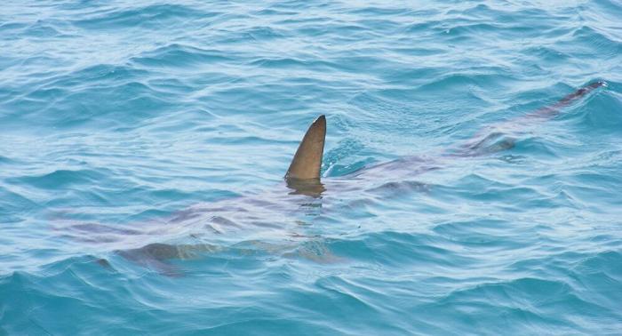 Mako oder Weißer Hai? Gigantischer Hai umkreist Boot – Video