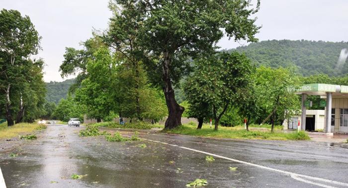 İsmayıllıda yağış kənd təsərrüfatına ziyan vurub