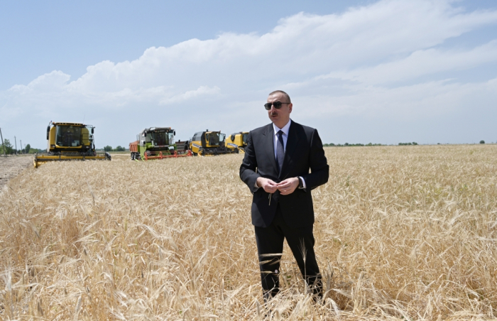 President Ilham Aliyev attends ceremony to start grain harvest in Aghjabadi
