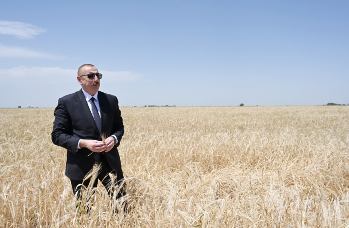 Prezident Ağcabədidə taxıl biçinini izləyib -  FOTOLAR (YENİLƏNİB)