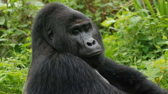 Rafiki, Uganda