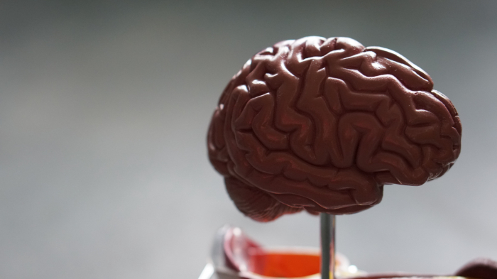 How to keep your delicate brain safe