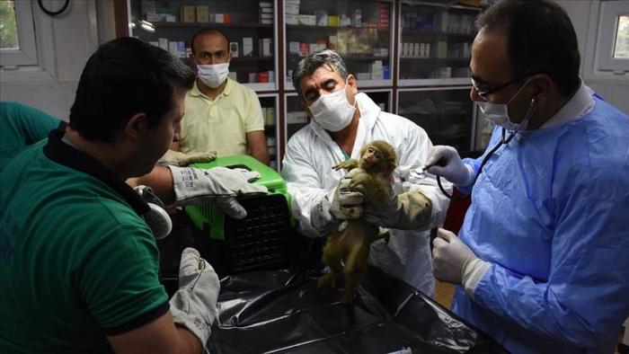 Informe de la ONU advierte que cerca del 60% de las infecciones humanas son de origen animal