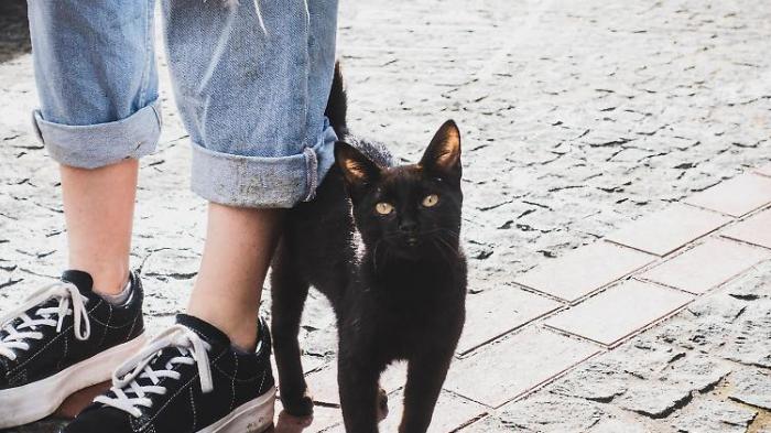 Wie Katzen zu anderen Haustieren wurden