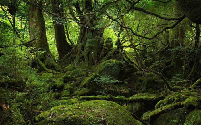 UNECE/FAO studies contribute to sustainable management of forests in Caucasus & Central Asia