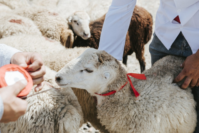 Azerbaijan marks Eid al-Adha