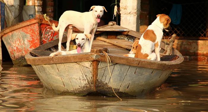 ولاية هندية تحظر بيع لحوم الكلاب وجماعات حقوقية تشيد بالقرار