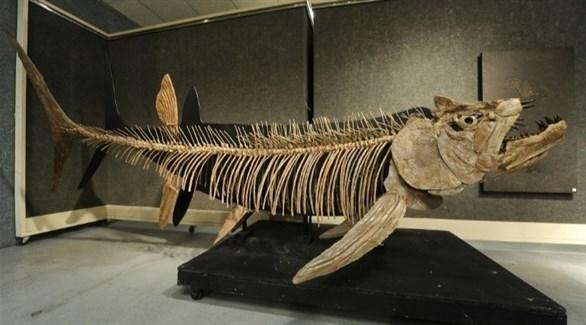 آكلة للحوم.. العثور على سمكة عملاقة تعود إلى 70 مليون سنة
