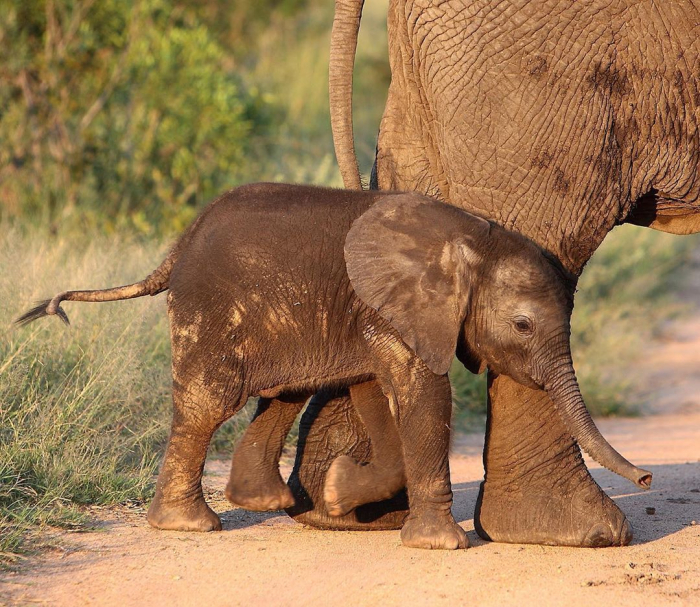 Watch mama elephant pull up tiny calf to help climb wall -   NO COMMENT