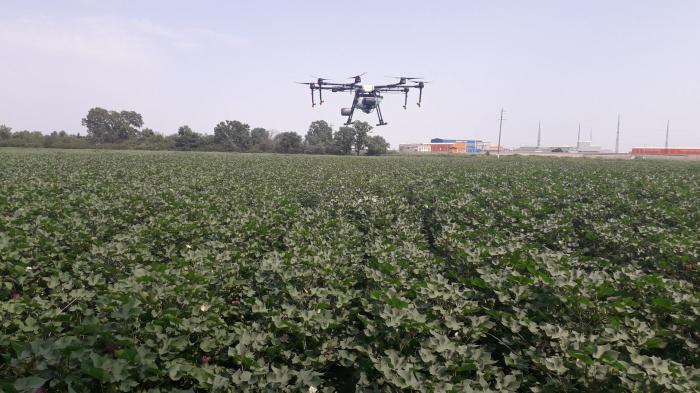 Dronla zərərvericilərə qarşı mübarizə aparıldı