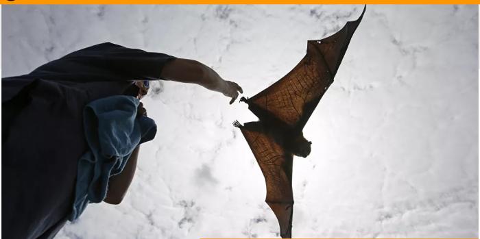يكتشف من الخفافيش نوعا جديدا