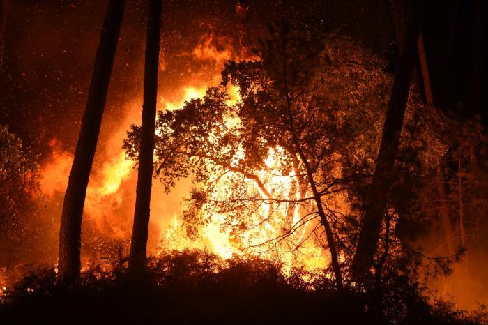 Le président algérien ordonneune enquête sur des incendiesqui ravagent le pays