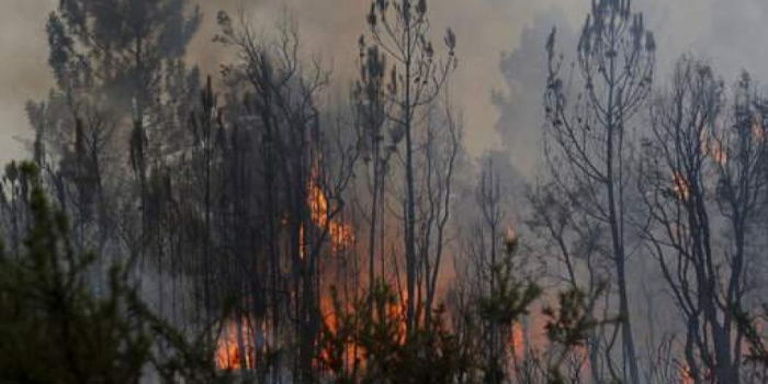 Thousands evacuated in southern France due to forest fires