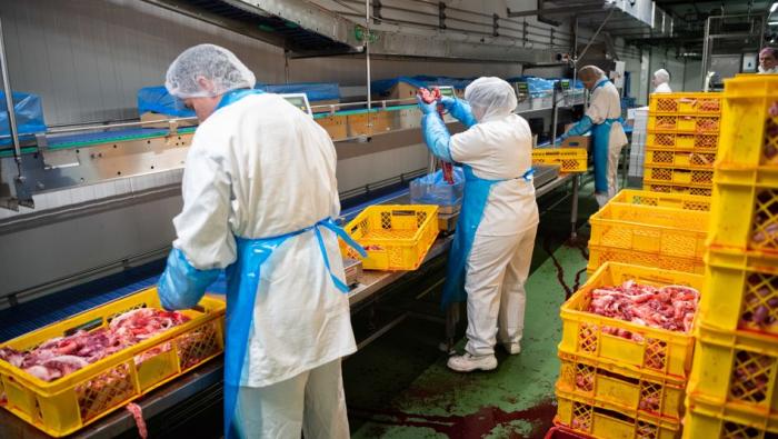 Schlachtbetriebe fast 50.000 Tonnen produziert weniger Fleisch