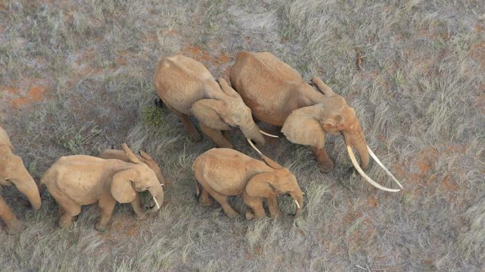 Elefanten-Massensterben in Botswana