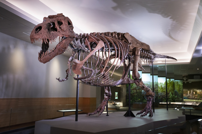 Malignant cancer found in dinosaur fossil for first time