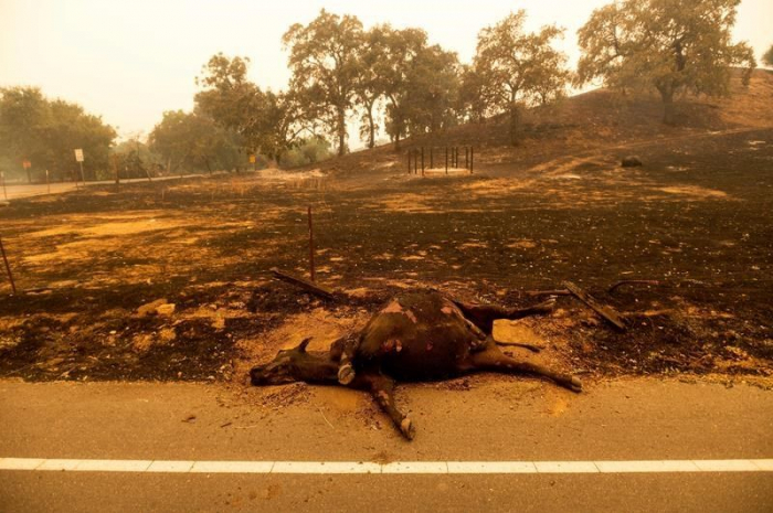 California wildfires forced thousands of residents to flee