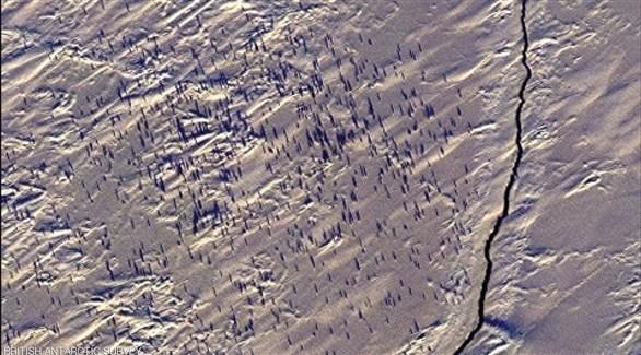 كشف عن مستعمرات جديدة البطريق في القطب الجنوبي