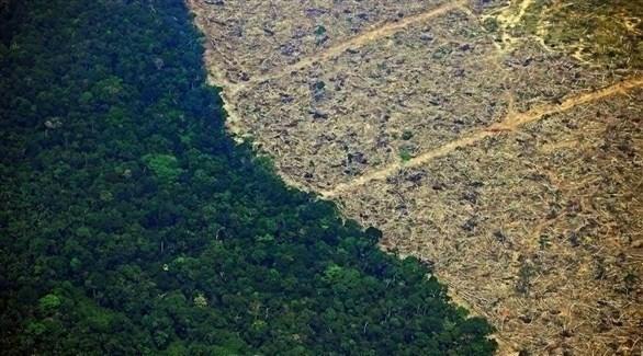مساحة الأشجار المقطوعة في الأمازون تبلغ 1654 كيلومتراً مربعاً في يوليو