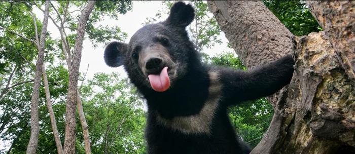 يتحمس الدب ويضرب الطائرة بدون طيار
