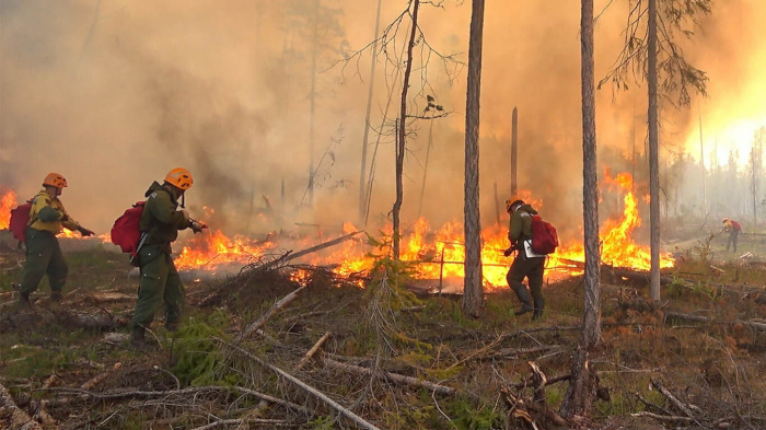 Arctic wildfires surpass record set in 2019 for CO2 emissions: EU