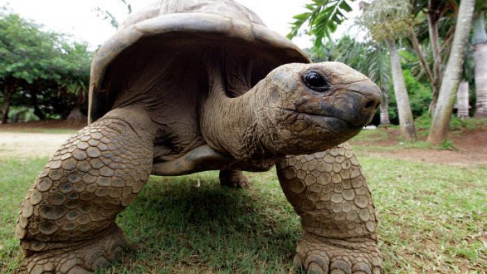 Riesenschildkröte beschäftigt Polizei