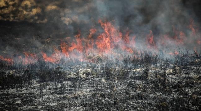 "FAO:   La forêt a perdu ""presque 100 millions d"
