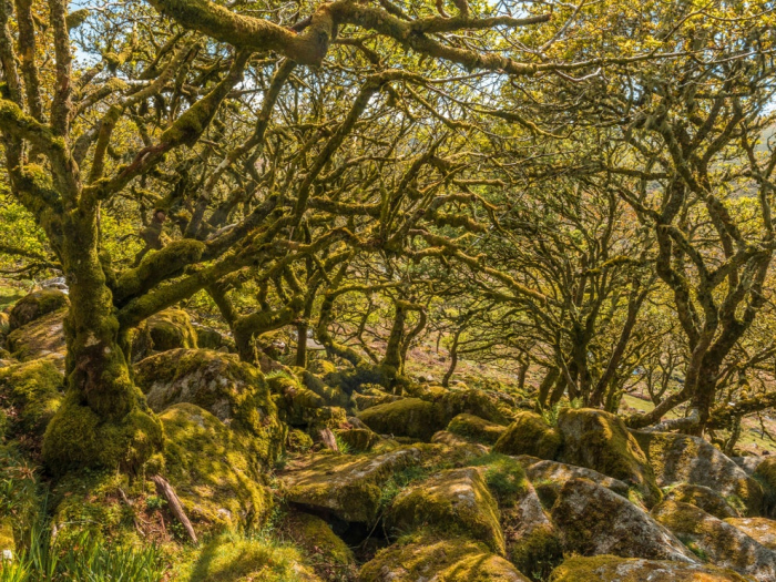 Europe's ancient forests in risky situation, scientists warn