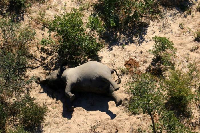 Fillərin kütləvi ölüm səbəbi məlum oldu