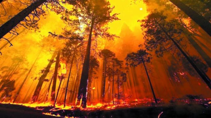 ETSN:  Şuşa meşələrinin yandırılması bəşəri cinayətdir