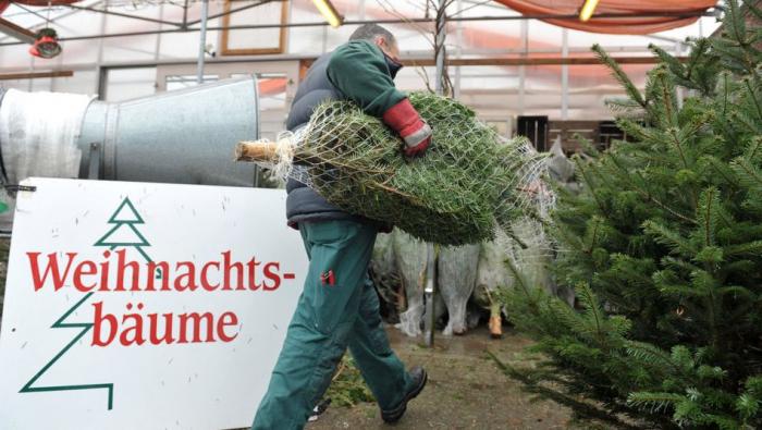 Weihnachtsbäume könnten in diesem Jahr teurer werden