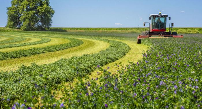 In den befreiten Gebieten wird die Landwirtschaft entwickelt