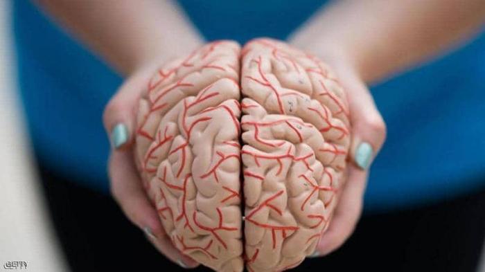 علماء يكشفون كيف يبني المخ الذاكرة الاستشعارية