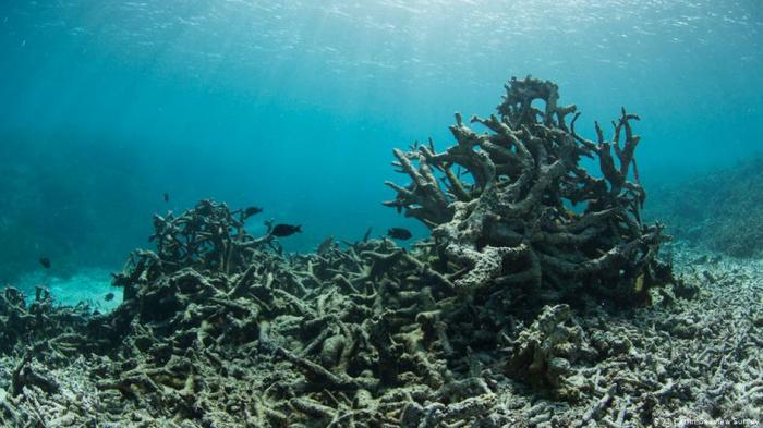 Corona bringt Ozeane in Gefahr:     Über eine Milliarde Schutzmasken im Weltmeer gelandet – Bericht